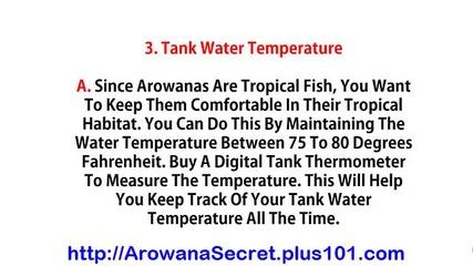 Arowana Fish Tank Setup, Arowana Care, Blue Arowana, Pearl Arowana Fish, Yellow Arowana