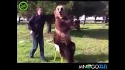 Руснак и добре дресирана мечка
