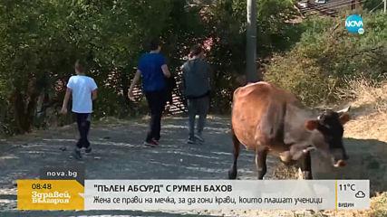 """""""Пълен абсурд"""": Стадо крави се разхождат ежедневно в училищен двор"""