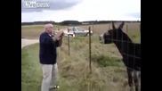 Пеещо магаре