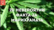 20 невероятни факта за марихуаната