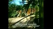 Слонът - Моят Приятел4.flv