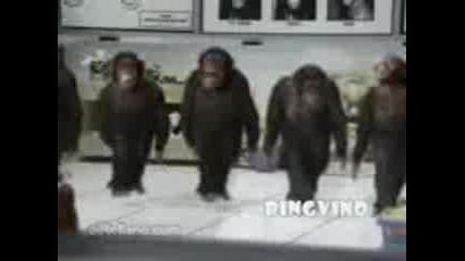 Маймуни Играят Хоро - Голям Смях