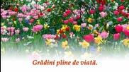 Порив на пролетта - музика Вивалди