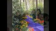 Герб-ерска пролет