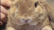 Запознайте се с това сладко зайче