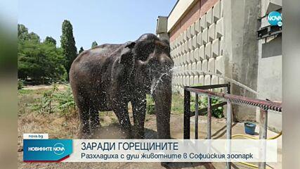 Разхлаждат животните в Софийския зоопарк