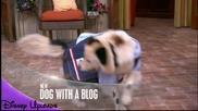 Куче с Блог Hoв епизод - Реклама