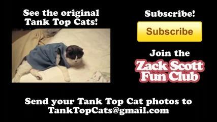 Компилация от най - смешните котки на света !