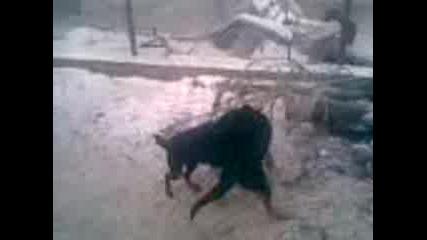 Ловджийски Кучета