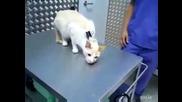 Как се деактивира котка
