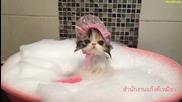 Къпят котенце в легенче!!!
