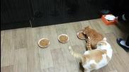 Две котета и три купички с храна .. а сега? : D