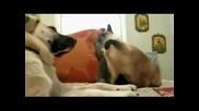 Котките обичат да се боксират!