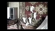 Смешни случки с котки 1