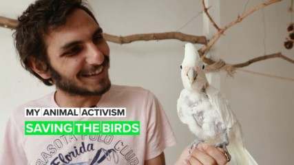 My Animal Activism: The Birdman