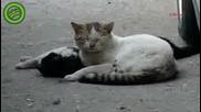 Котка се опитва Да Даде живот на Своята Любов - Една Истинска Любов