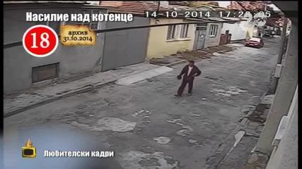 Прокуратурата се зае с убиеца на малкото коте - Господари на ефира 06.11.2014)