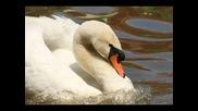margarita hranova-kato ptica s raneni krile 1986