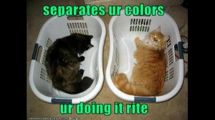 Very Funny Cats..flv
