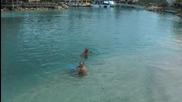 • Райско кътче• Curacao