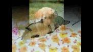 Кучета - Снимки