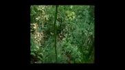 Най - Опасните Животни В Света: Коста Рика (част 1)