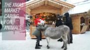 Austria's animal sanctuary Christmas market XMAS22