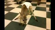 Сладко бебе кенгуру се учи да върви и се пързаля .