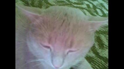 Моето Котенце Рижко