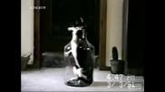 Котенце Влиза И Излиза От Бутилка
