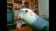Папагалче Пее