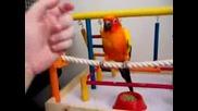 tancuva6ta ptica