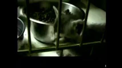 Ужас! Коте се измъчва, след като е било използвано за научни опити!