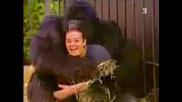 Да нахраним горилата...да нахранят и нас...