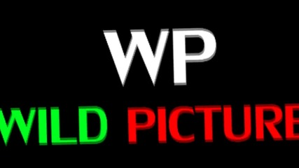 Wild Pictures New Intro 2013