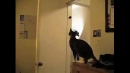 Паркур котка удивително!