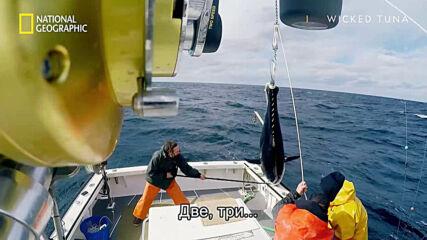Риба на пръчка | Морски вълци | National Geographic
