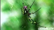 Нападение от паяци ! (смях)