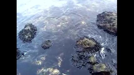 Mov01083 Риба на канала в кв.аспарухово