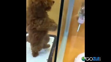 Кученце танцува салса