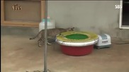 Котка краде жив октопод , но остана гладна, смях