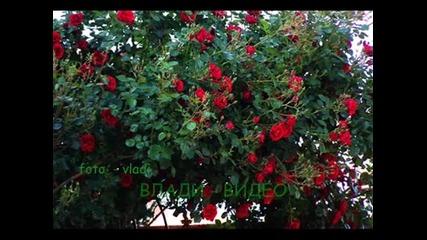 Моите Цветя Импресия
