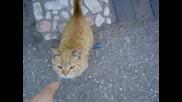 котка на път към работа