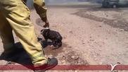 Мексикански пожарникар охлажда коте с бутилка вода спасено от огнен ад!