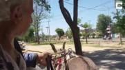Пакистанец пасе листа и клони от 25 години