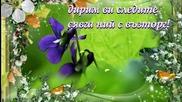 Горски теменужки ... ... (с поезията на Трайко Симеонов) ... ...