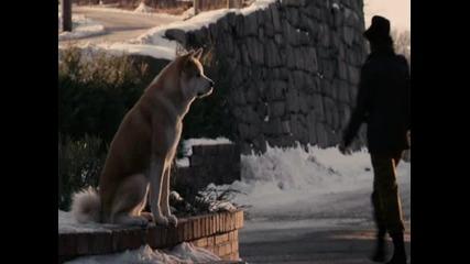 Една тъжна история за едно куче...