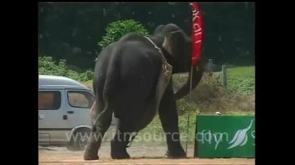 100% смях.полудял слон си го изкарва на микробус
