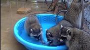 Миещи Мечки парти в басейна